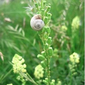R1: La Biodiversité, concept écologique et affaire planétaire, R. Barbault