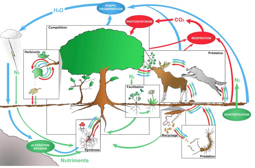 R3 Fonctionnement Des écosystèmes N Mouquet Et Al Sfecologieorg