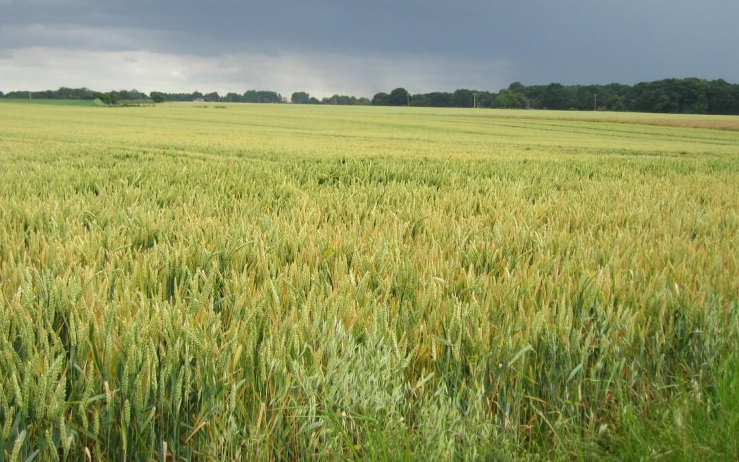 R21 : La biodiversité des champs, par F. Papy et I. Goldringer