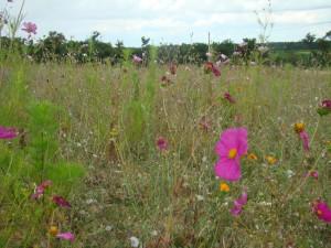 R14 : Biodiversité et sociétés : Les quatre R de la conservation, A.C. Prévot-Julliard et al.