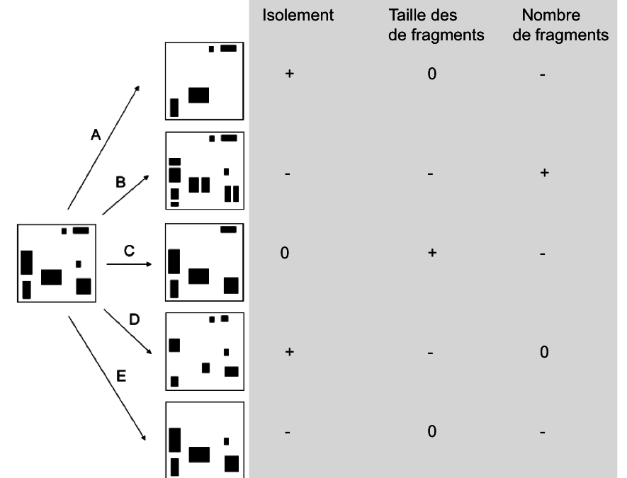 R6: La fragmentation des habitats, J. Thompson et O. Ronce