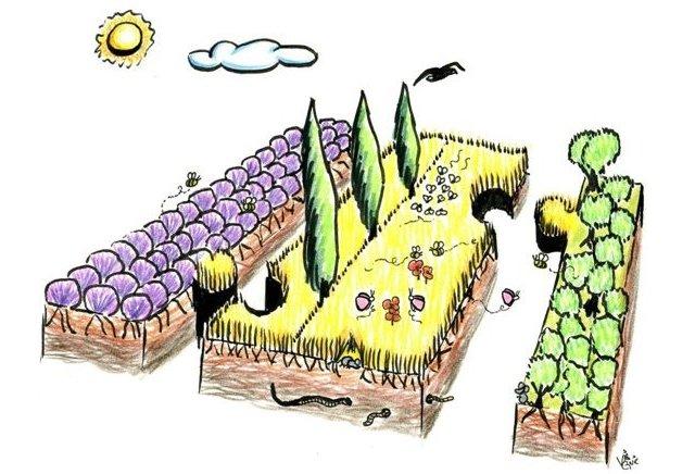 R24: La biodiversité, atout pour l'agriculture, par Thierry Doré