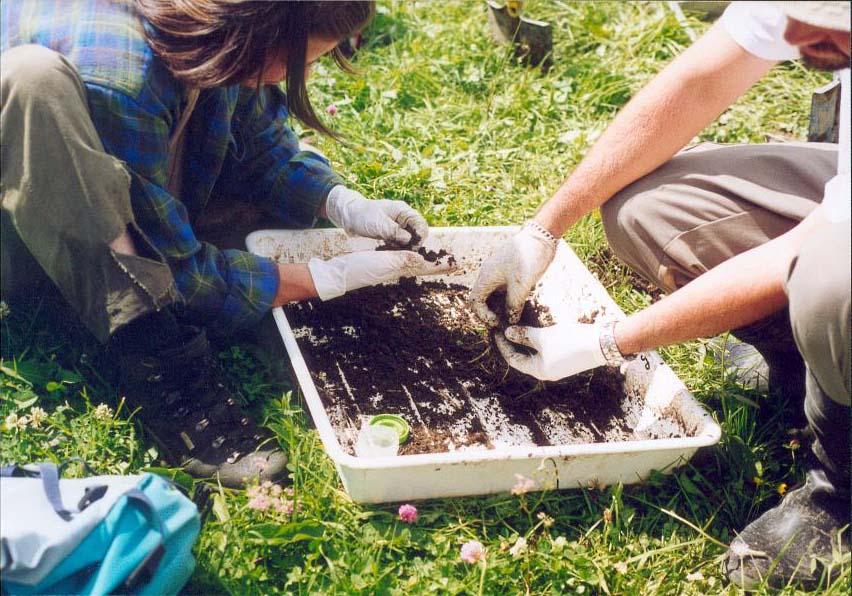 R28 : Les écosystèmes du sol, par S. Barot et F. Dubs