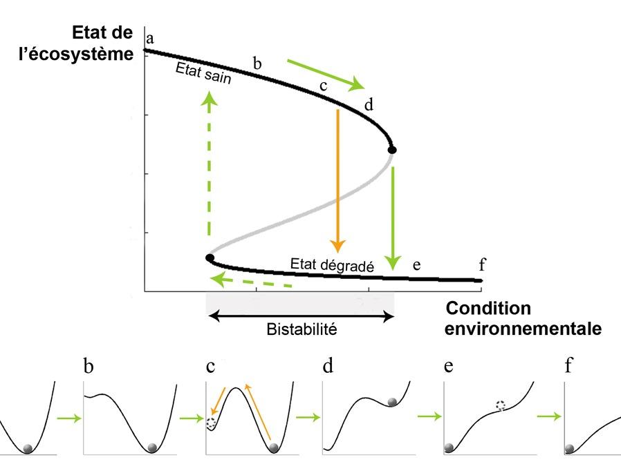 R37: Ecosystèmes et transitions catastrophiques, Sonia Kéfi