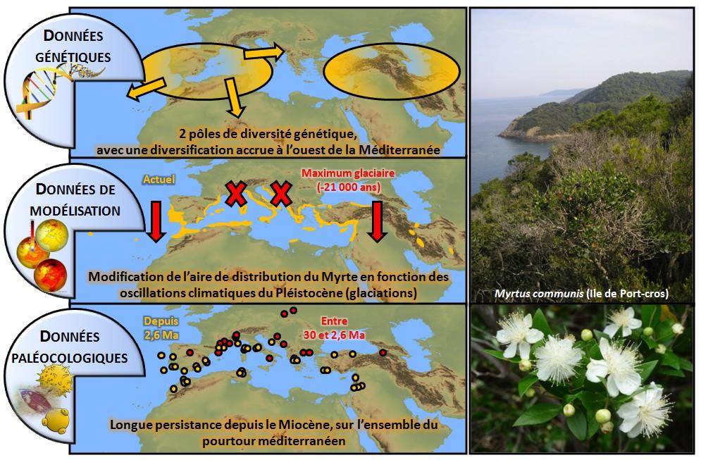 R38: La biodiversité végétale méditerranéenne, F. Médail et al.