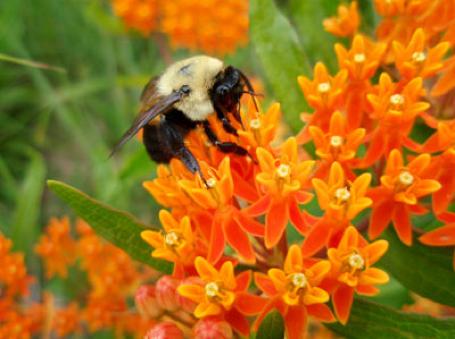 R46 : Impact de la perte de biodiversité sur les sociétés, par Patrick Venail