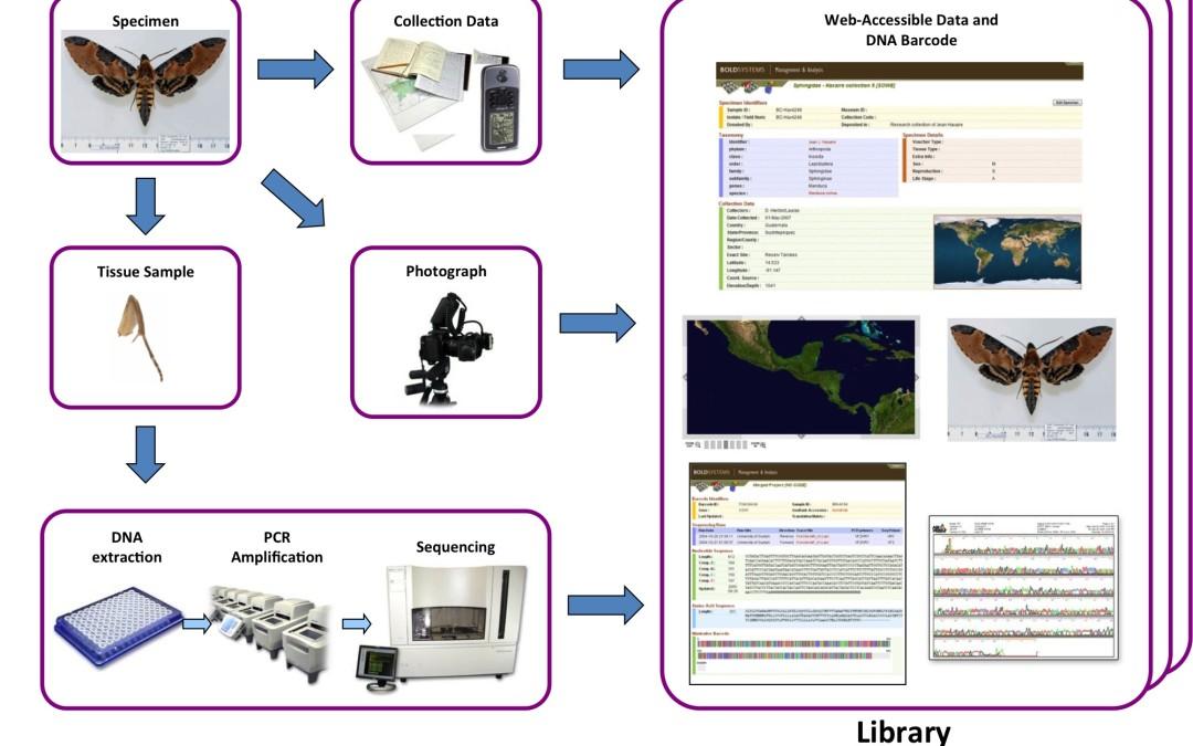 R50 : Le barcoding ADN, par T. Decaëns, D. Porco et R. Rougerie