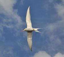 R55 : Toute la lumière sur la migration des oiseaux, par David Grémillet