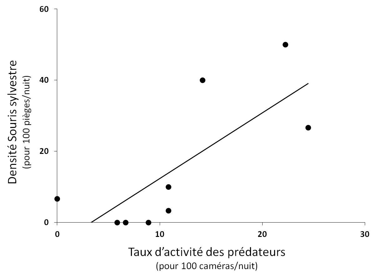 Figure 4. Relation significative entre la densité de Souris sylvestre et le taux d'activité des prédateurs (r² = 0.57 ; P < 0.05).