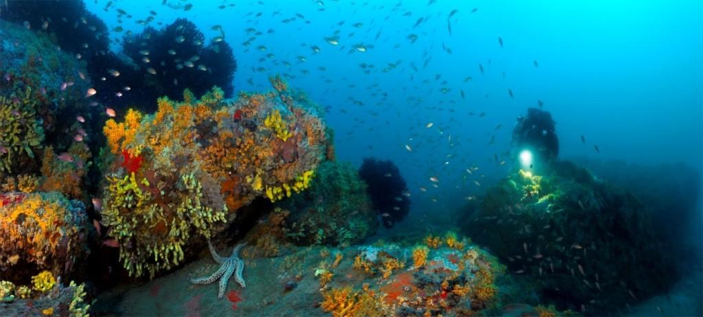 coralligène