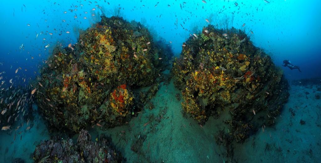 Figure 1 : Récifs coralligènes en forme de massifs au large de Fréjus (France)- © Laurent Ballesta