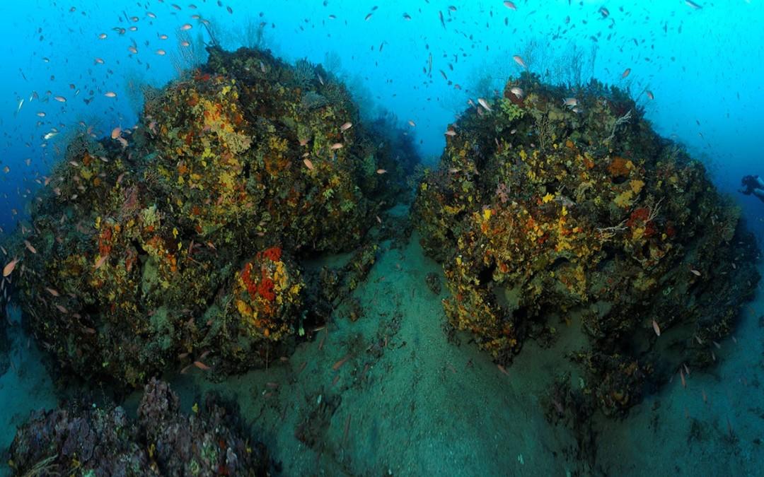R66 : «Les récifs coralligènes, un habitat sous-marin riche en biodiversité mais vulnérable» par F. Holon et J. Deter