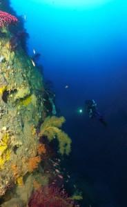 Tombant de coralligène à Villefranche-sur-mer © Laurent Ballesta