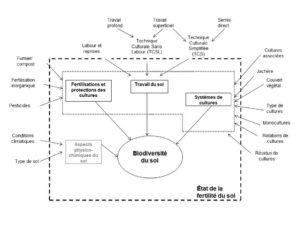 Figure 3 : Résumé des mécanismes par lesquels la biodiversité du sol est influencée par le système de culture.