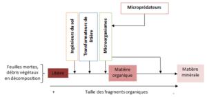 Figure 2 - Influence de chaque groupe fonctionnel sur la transformation de la litière en matière organique puis en matière minérale