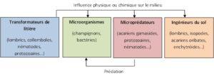 Relations entre les principaux groupes fonctionnels de la biodiversité du sol