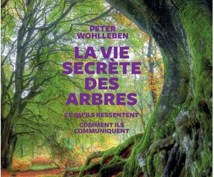 RO5 : Regards sur le livre de Peter Wohlleben, La Vie secrète des arbres