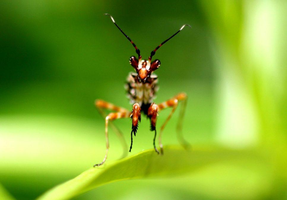 Appel pour le climat et la biodiversité des Sociétés Savantes, lancé par la SFE²