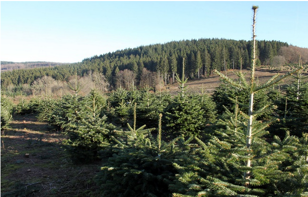 R86 : Quel avenir pour la forêt française ?  par Jean-François Ponge