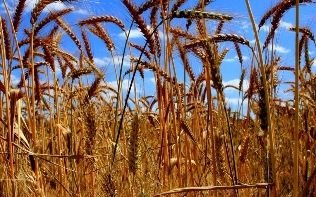 RO9 Analyse de modèles d'agriculture au prisme de la « santé unique », par M. Duru et al.