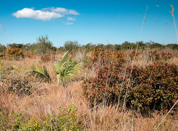 R90 : Restaurer les écosystèmes tropicaux, par S. Le Stradic et E. Buisson